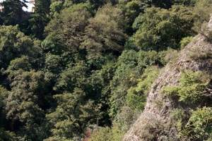 六盘山长征景区—野荷谷—六盘山国家森林公园汽车两日纯玩游