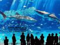 珠海至广州海洋馆、动物园一天0756-2618486
