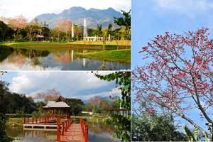 西双版纳热带植物园+傣族园--野象谷二日游