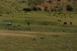兰州出发  临夏东公馆、拉卜楞寺、桑科草原2日游