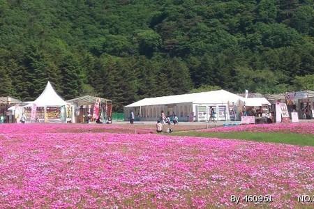 太原出发到日本玩:日本本州伊豆双温泉美食8日游