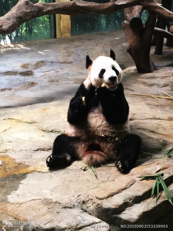 【栾川竹海野生动物园】春季特惠一票通,提前2小时