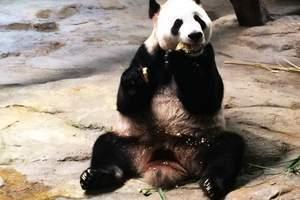 惠州-广州长隆水上乐园+动物园两天游