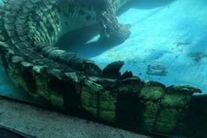 广州鳄鱼公园