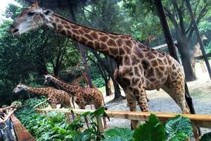 十一新乡去长隆旅游 新乡到广州长隆野生动物园、海洋王国6日游