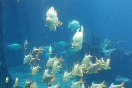 珠海長隆海洋王國+廣州野生動物園3日游