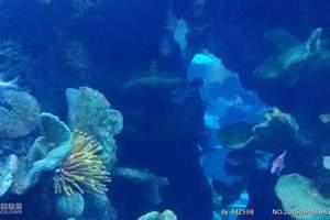 郑州到青岛、日照、黄岛、海底世界汽车4日游-海底之旅