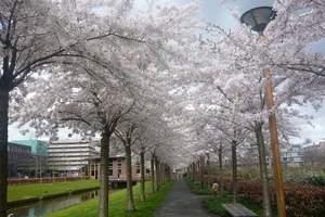 贵阳到日本旅游 日本本州双古都温泉畅享6日游