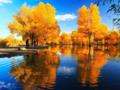 十一国庆额济纳旅游攻略|金色胡杨林宁夏沙湖专列7日游