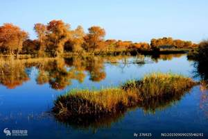 喀什国家森林公园—泽普金湖杨汽车2日游