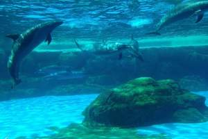 合肥出发长隆野生动物园、长隆欢乐世界、长隆水上乐园双飞4日游