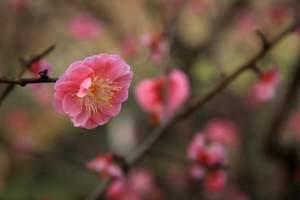 宜昌赏花 宜昌到西陵峡世外桃源赏桃花半日游 宜昌看桃花的地方