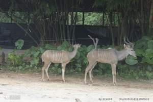 亲子闺蜜 青岛到刘公岛+西霞口动物园二日游 山东好玩动物园