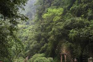 纯玩:武汉到长江三峡、白帝城,神农架、探秘五日游