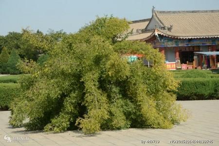 銀川出發到額濟納胡楊林,徒步穿越騰格里沙漠精華6日游