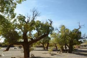 兰州出发巴丹吉林胡杨林航天城黑城怪树林居延海张掖海丹霞5日游