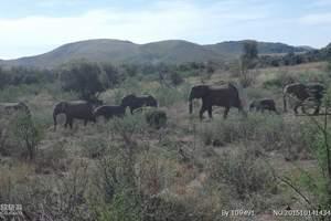长春去南非线路八日游多少钱【野性猎奇,探索自然】-长春起止