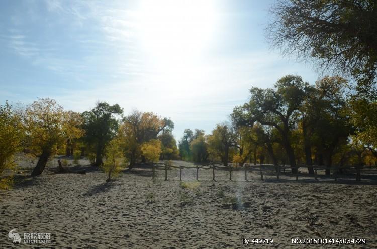 郑州国庆节到张掖|胡杨林 黑水城|怪树林双卧七日旅游
