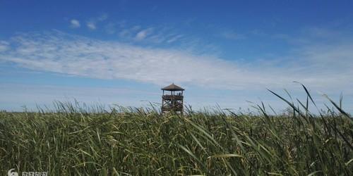 丹顶鹤保护区