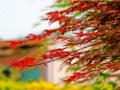 青岛到日本旅游推荐—日本本州+伊豆温泉、蟹道乐料理豪华6日游