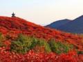 天津到北京香山旅游价格_天津到香山旅游网_香山红叶休闲一日游