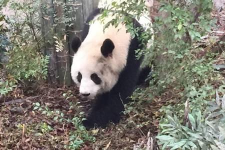 九寨沟黄龙熊猫乐园双动车5日(无自费、全程四星酒店)