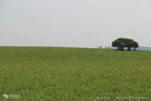 【草原旅游推荐时期】内蒙古锡林郭勒草原休闲3日游