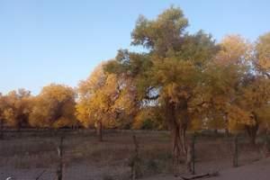 胡杨林沙漠地质公园