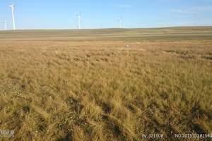 鄂尔多斯出发鄂尔多斯草原一日游