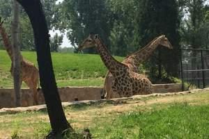 【惠州到佛山】顺德长鹿欢乐世界、野生动物园、岭南水乡1日游