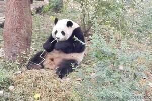 深圳报团去麻辣双城-成都重庆网红美食休闲游