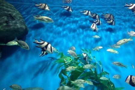 福州周边游 福州亲子游 罗源湾海洋世界7选1日游
