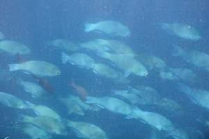 马代六星岛屿-马尔代夫齐塔莉岛六星豪华岛屿