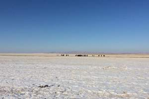 霸道越野车、穿越冬季呼伦贝尔草原、额尔古纳、满洲里三日游