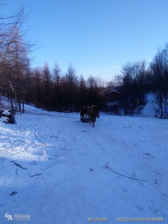 哈尔滨雪乡穿越漠河七日游