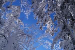 """哈尔滨到爸爸去哪儿大雪谷-雪乡 """"功夫熊猫""""滑雪4日冬令营"""