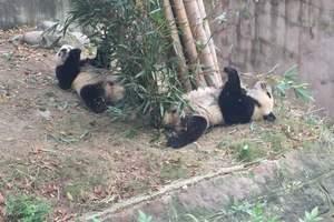 三星堆、熊猫基地一日游 成都周边一日游报价 成都周边一日游团