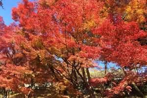 北京到日本北海道旅游攻略   东京+北海道6日游