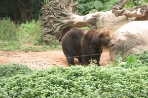 苏州出发<上海野生动物园1日游>