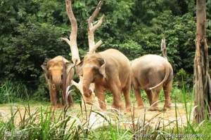 广州长隆动物园世界、国际大马戏、长隆水上乐园两天纯玩游