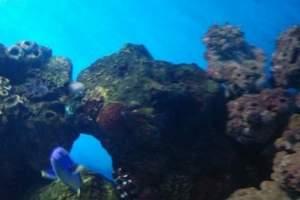 天津海洋馆一日游
