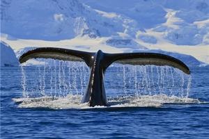 北京到北极旅游报价、格陵兰、西西缪特—伊库珀冰川14日冒险游