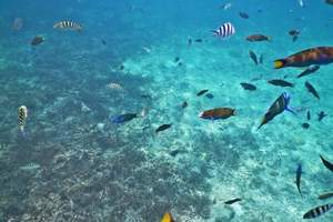 马来西亚沙巴、美人鱼岛、海豚湾双飞六日游|马来西亚沙巴旅游线