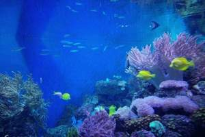 郑州海洋馆优惠电子门票