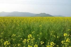 深圳到呼伦贝尔大草原、SUV穿越莫日格勒、恩和、满洲里五日游