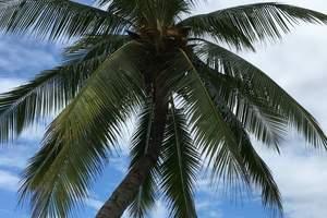 优惠海南旅游线路 直飞三亚欢乐海南西岛、亚龙湾猴岛双飞五日游