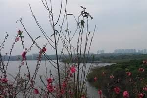 惠州到东莞松山湖、百花洲赏花1天游