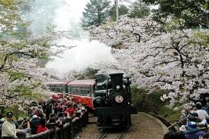 游赏本州一站式游览日本-京都+京东+富士山经典6日游