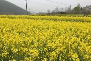 去江西旅游 南昌、景德镇、婺源、三清山5天