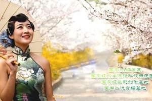 邹平樱花山旅游团 邹平樱花山赏樱花、长丰农场亲子一日游